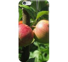 Sunlit Red Apples, Lost Gardens of Heligan, Cornwall iPhone Case/Skin
