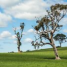 Lone tree 2 by Candice84