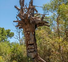 Old Man Tree by DPalmer