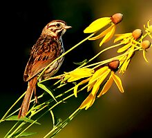 Song Sparrow on the Prairie by Jayne