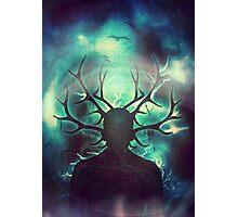 Deer Dreams II Photographic Print