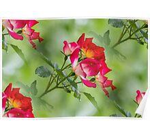 flower in spring Poster