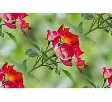 flower in spring Photographic Print