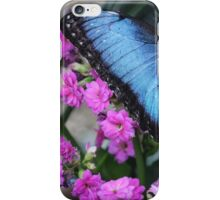 Dazzling Blue Morpho iPhone Case/Skin