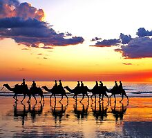 Camels at Sunset, Cable Beach, Broome by Mark Boyle