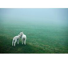 Lost Lambs Photographic Print