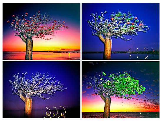 The Four Seasons by Mark Boyle