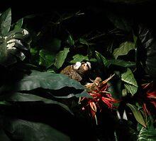 Hide & seek by Noor Y