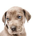Great Dane Puppy  by Andrew Bret Wallis