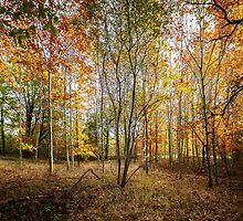 Autumnal Wood by TonyPriestley
