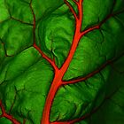 #11        Swiss Chard Leaf by MyInnereyeMike
