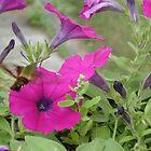 Hummingbird moth by Tamara Weiss