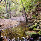 Autumn Woodland Stream by David Lewins
