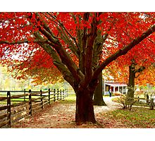 #68  Homestead In Autumn Photographic Print
