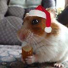 Merry Christmas From Timmy! by Vicki Spindler (VHS Photography)