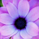 Purple Flower by craigNdi