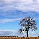 Into The Trees II by Craig Shillington