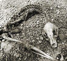 #99    Skeletal Remains by MyInnereyeMike