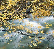 Water through leaves by Elizabeth Heath