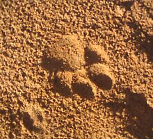 Brown Hyena paw print by Tigris