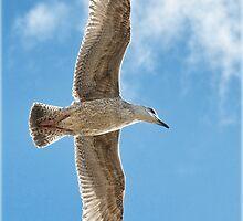 Free As A Bird by Susie Peek