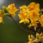 Yellow Azalea by Tess Johnson