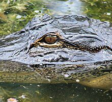 alligator eye by sonygirl