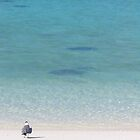 Bird watching Stingrays by skurm002