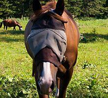 Horses after eye doctor by Gleb Zverinskiy