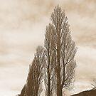 Sepia Trees by Fara