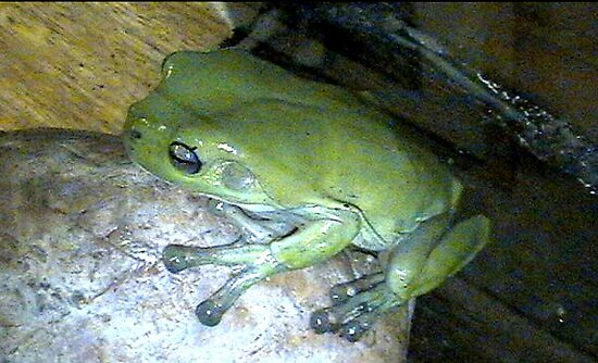 I,m the frog they call me kermit by aggieeck