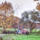 Country Autumn by Richard Bean