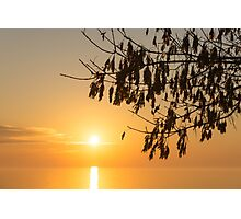 Brilliantly Sunlit Golden Autumn Jewels Photographic Print