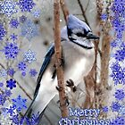 Blue Jay Christmas by WalnutHill