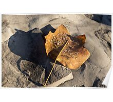 Tulip Tree Leaf – Frozen Raindrops in the Sunshine Poster