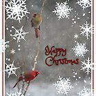Happy Christmas - male and female Northern Cardinal by WalnutHill