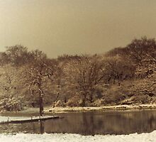 Rising Sun Boating Lake in Winter by Gordon Hewstone