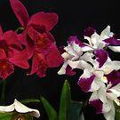 Belles Fleurs by MarianBendeth