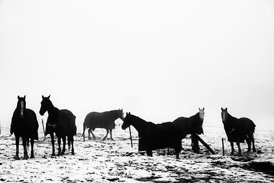 Horses by Jonathan Russell