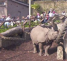 Rhinoceros by Gilliankaye