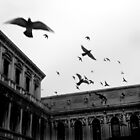 Bombing Piazza San Marco by Bilks