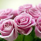 Pink Roses by narabia
