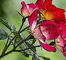 flower in spring by spetenfia