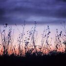 Wild Flowers at Dusk by Vicki Field
