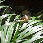 butterfly by susanptoft