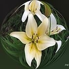 3 Lilies by Judy Gayle Waller