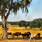 Ocala Horse Farm by Judy Gayle Waller