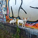 Urban Dogs by Andy Harris