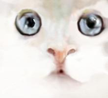 White Kitten with Large Blue Eyes Sticker