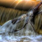 Force of nature by Phil Scott